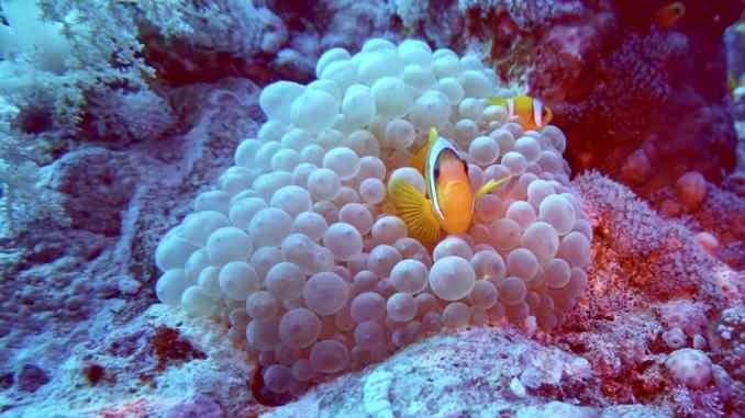 Reisebericht Safaga Tauchen in Safaga: Die Korallenriffe im Roten Meer sind absolut herrlich und intakt! Foto: Sascha Tegtmeyer