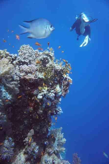 Tauchurlaub in Ägypten: herrliche Korallenriffe und viele exotische Meerestiere locken Taucher an! Foto: Sascha Tegtmeyer