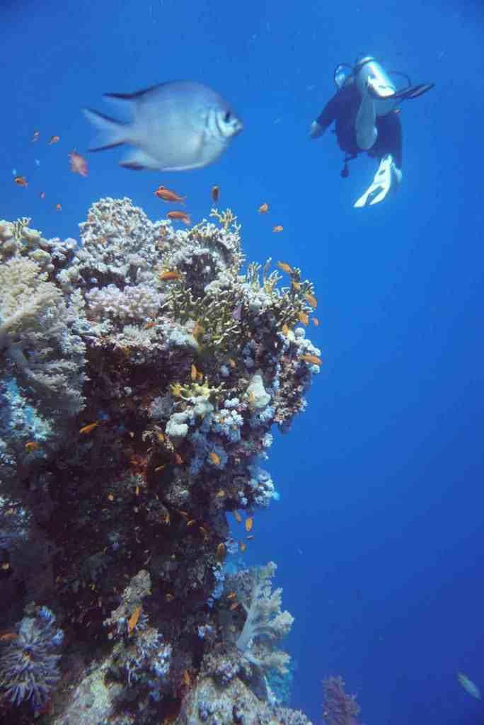 as Orca Dive Village bei Safaga ist voll und ganz für Taucher konzipiert. Foto: Sascha Tegtmeyer Tauchurlaub in Ägypten: herrliche Korallenriffe und viele exotische Meerestiere locken Taucher an! Foto: Sascha Tegtmeyer