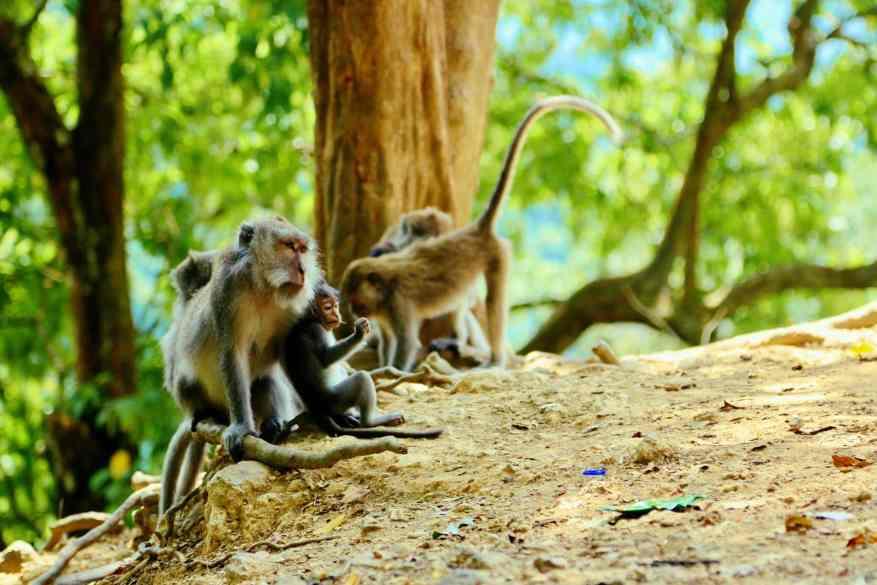 Naturreisen: besonders in tropischen Gefilden könnt Ihr im Urlaub Tiere beobachten. Foto: Sascha Tegtmeyer