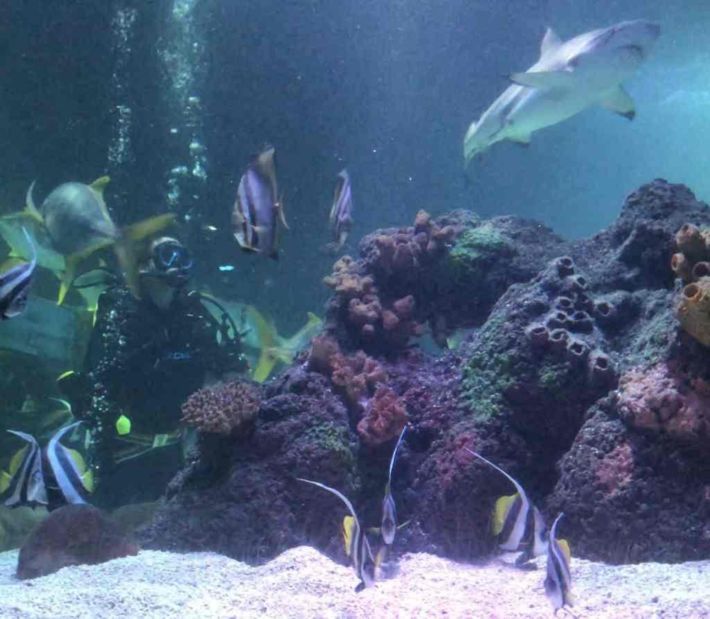 Für Kids gibt es zahlreiche Meerestiere zu entdecken.