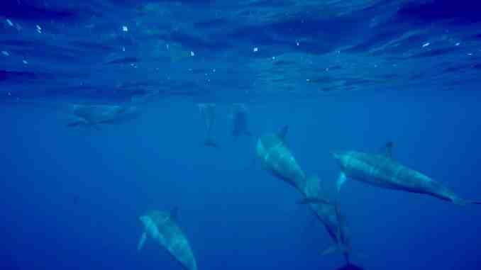 Nadar con delfines en Mauricio: fuimos a bucear con los mamíferos marinos y anotamos nuestras experiencias. Foto: Sascha Tegtmeyer