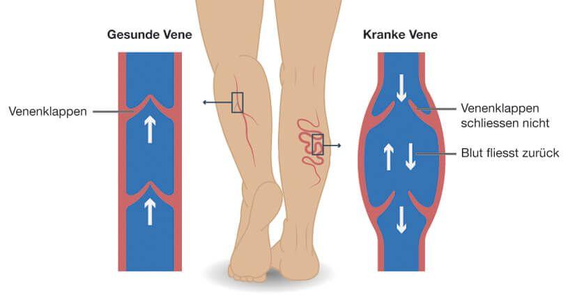 la función venosa