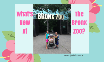 bronx zoo family membership