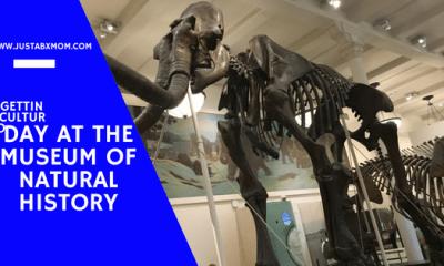 american museum of natural history, amnh, mammoth