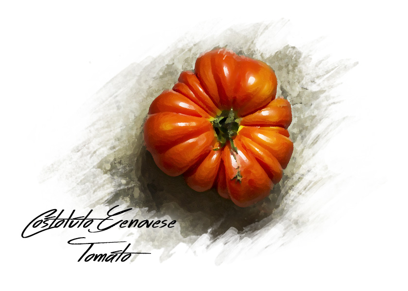 Watercolor style photo of a red heirloom tomato