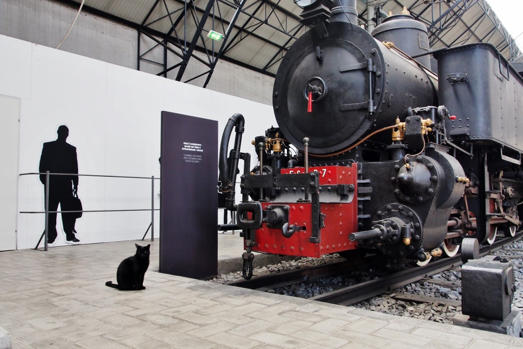 Locomotive et chat