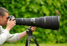 Professional Photographs