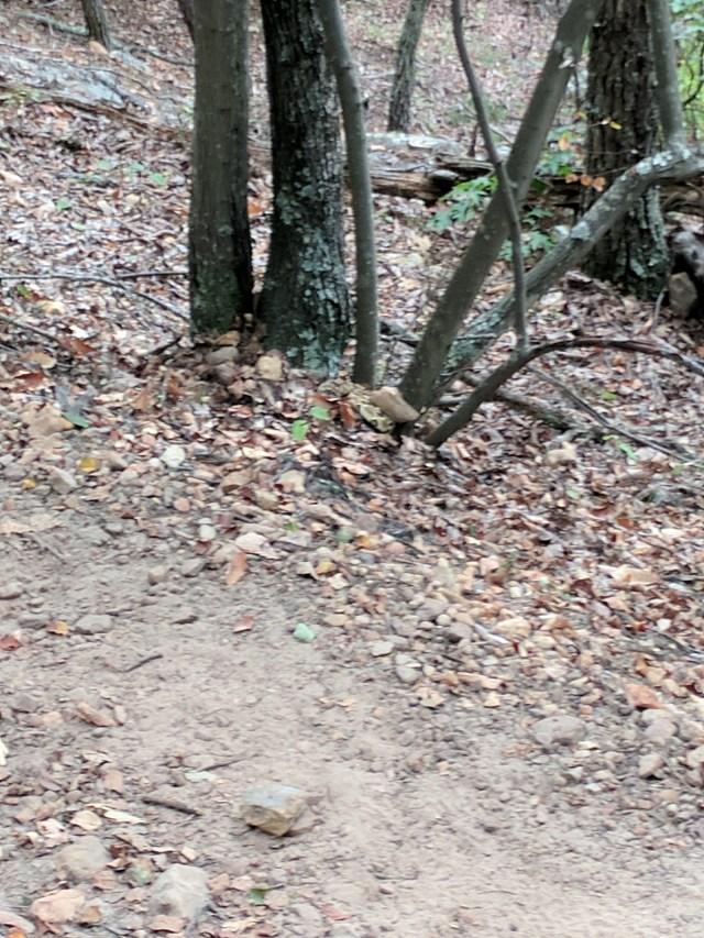 hiking snake