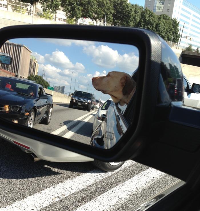 Wheeler riding in the car