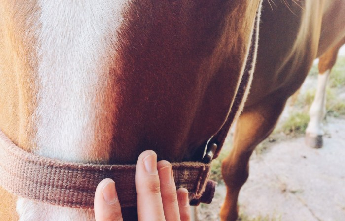 "My ""Aha"" Moment About Horseback Riding"