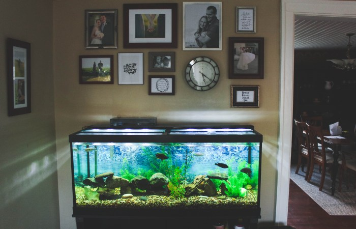 A Peek Inside Our Place // Fish Tank & Gallery Wall