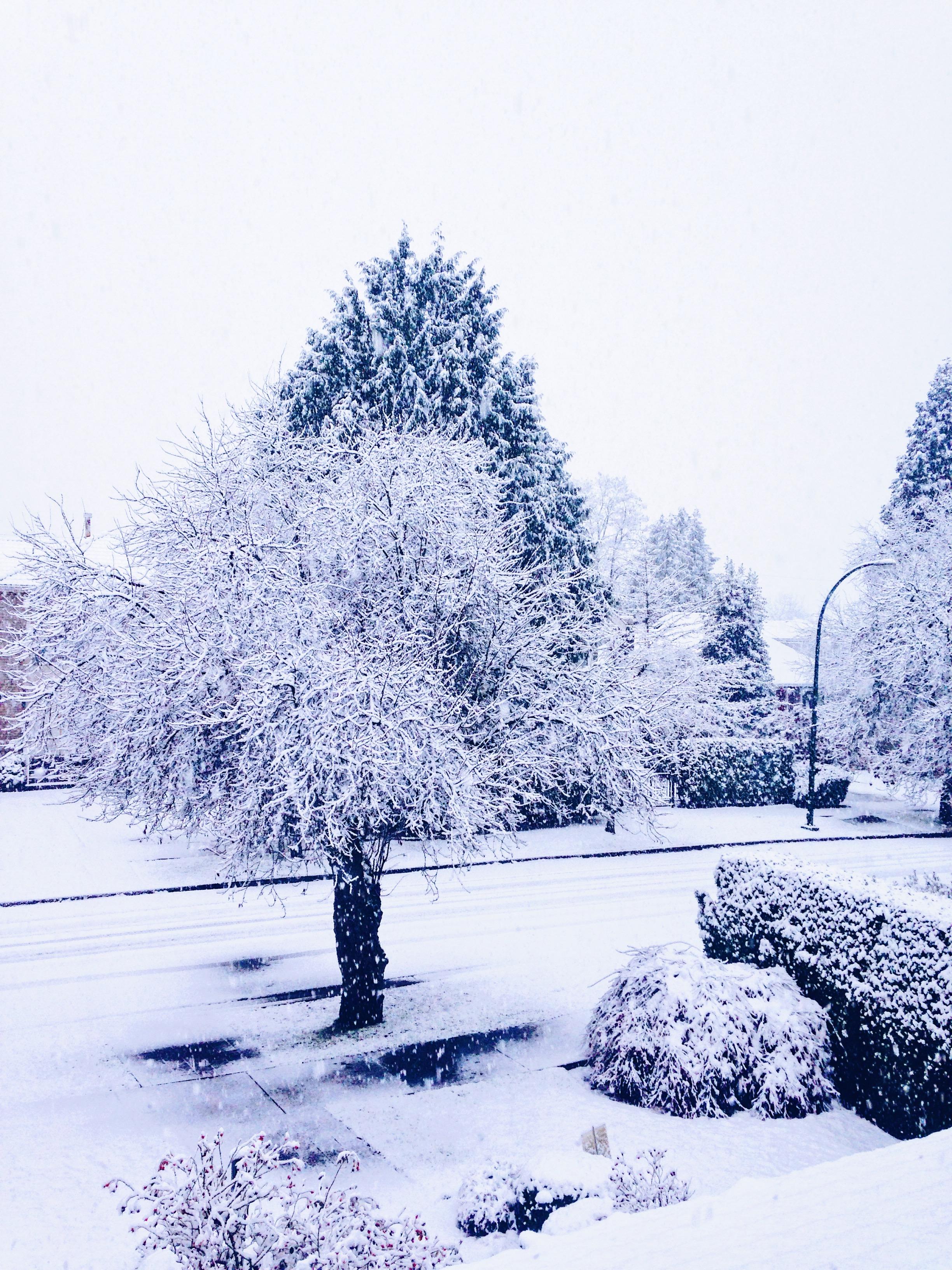 My favorite photos of winter so far