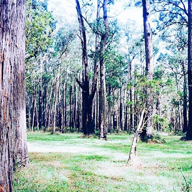 Flash Back Friday - A Picnic In The Dandenong Ranges