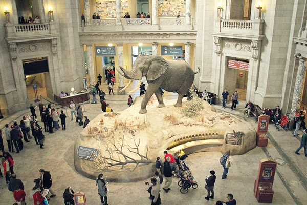 African elephant in the rotunda of the Museum of Natural History