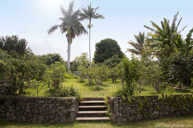 Caffeinated in Kona, Hawaii: Visiting Greenwell Farms