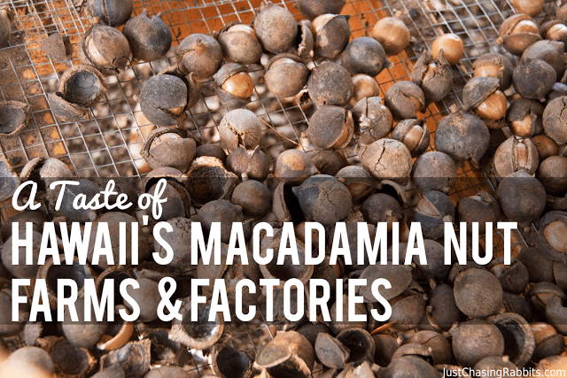 A Taste of Hawaii's Macadamia Nut Farms and Factories