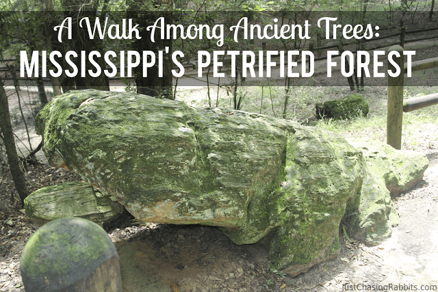 A Walk Among Ancient Trees: Mississippi's Petrified Forest