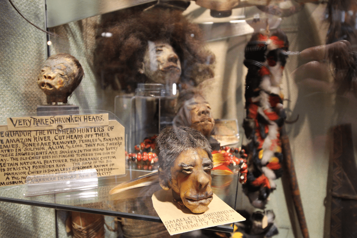 See the Oddities of Seattle's Ye Olde Curiosity Shop