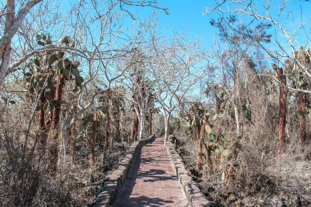 Cobblestone Path to Tortuga Bay with Cacti