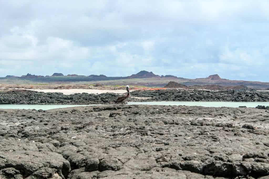 A stop on the 360 tour to Kicker Rock Galapagos
