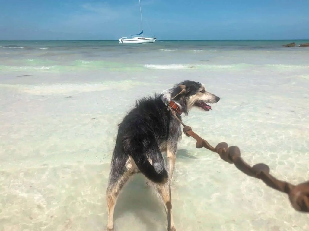 Visit Holbox's animal refuge and take a pup for a walk on the beach