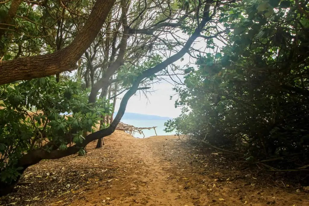 Tree lined dirt path leading to Secret Beach in Paia Maui