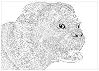 Cani 82875 - Cani - Disegni da colorare per adulti