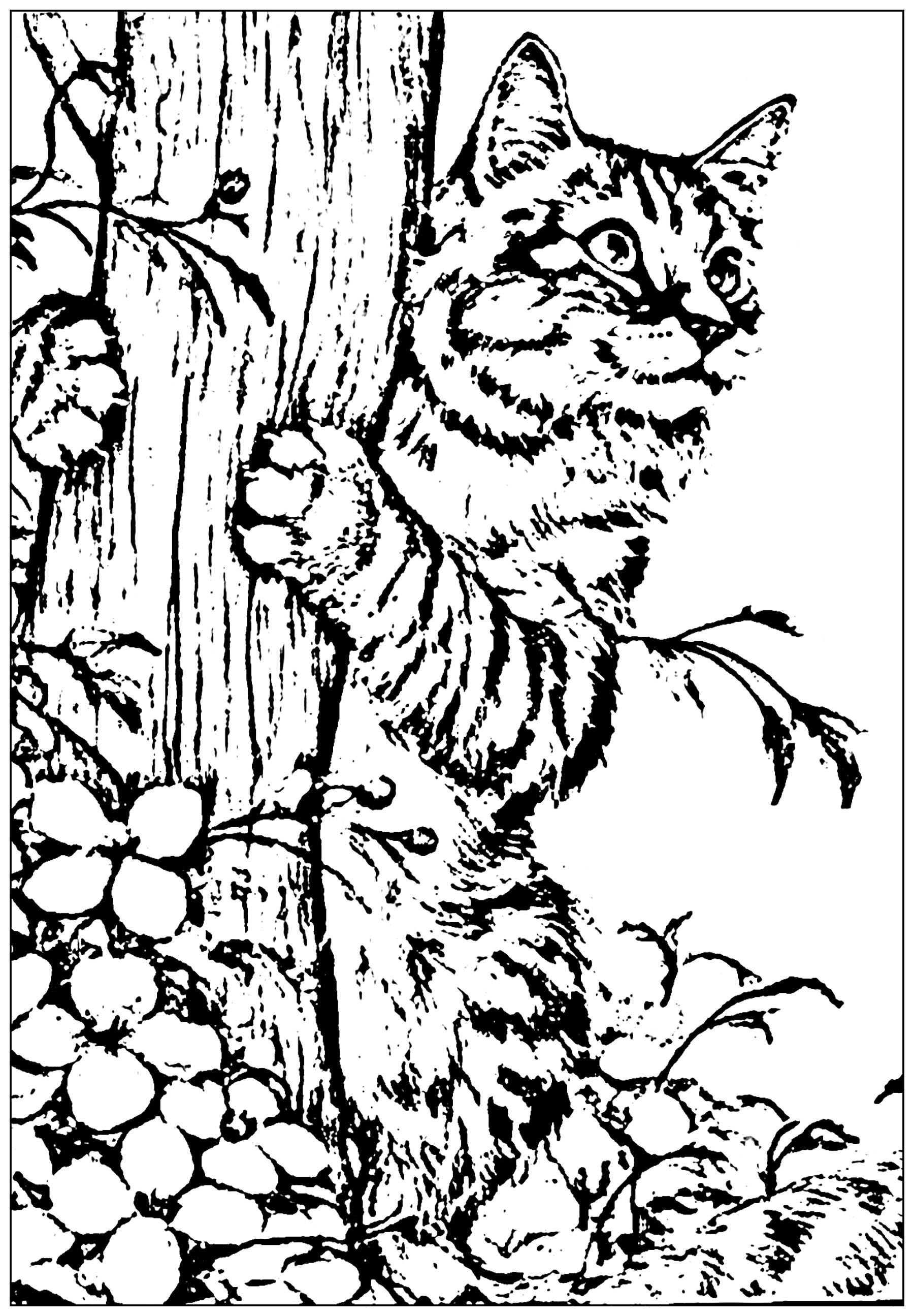 Cat To Print Created From A Picture