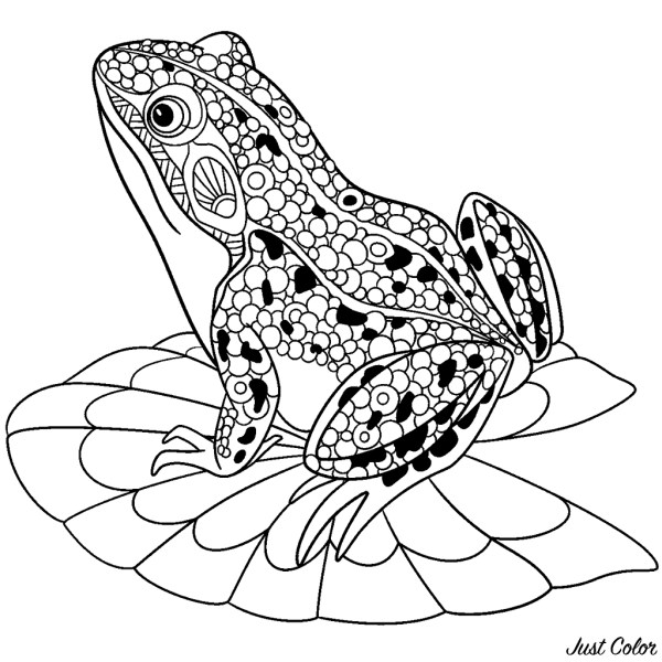 frogs coloring pages # 8