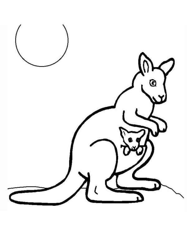 kangaroo coloring pages # 1