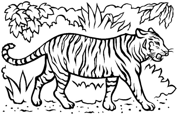 coloring pages of tigers # 3