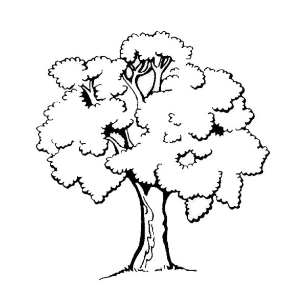 coloring pages of trees # 8