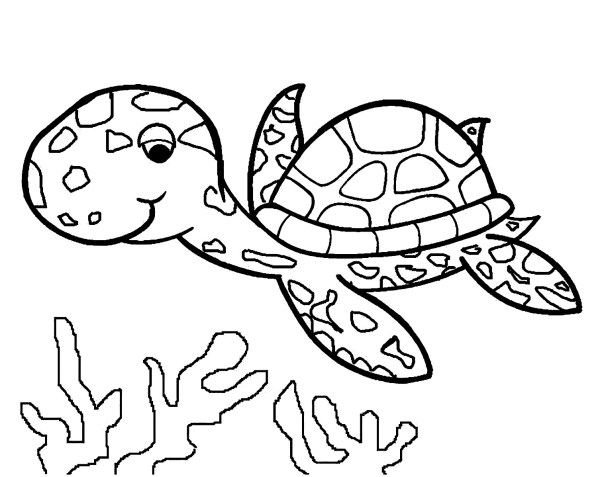 coloring pages turtle # 34