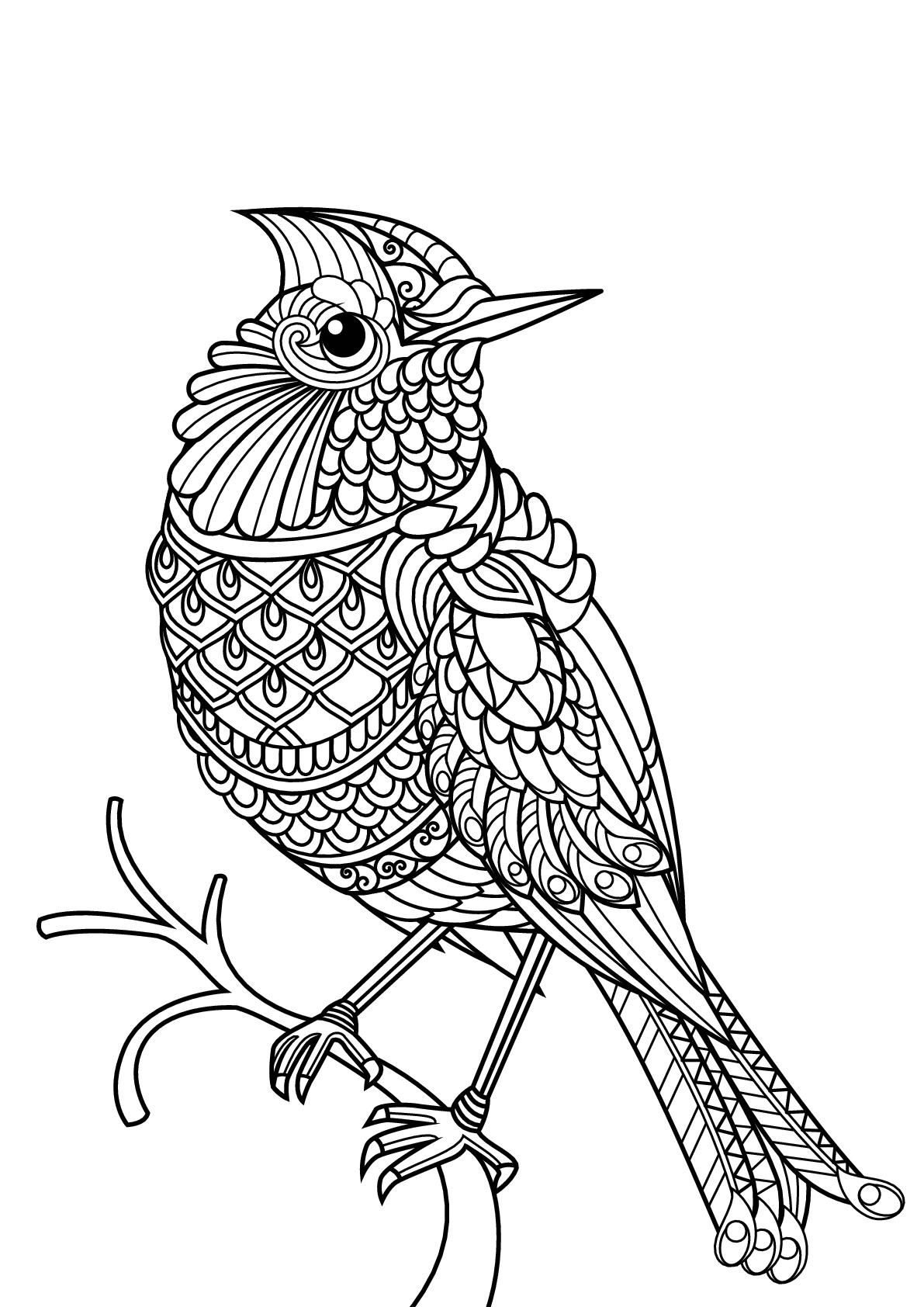 Free Book Bird
