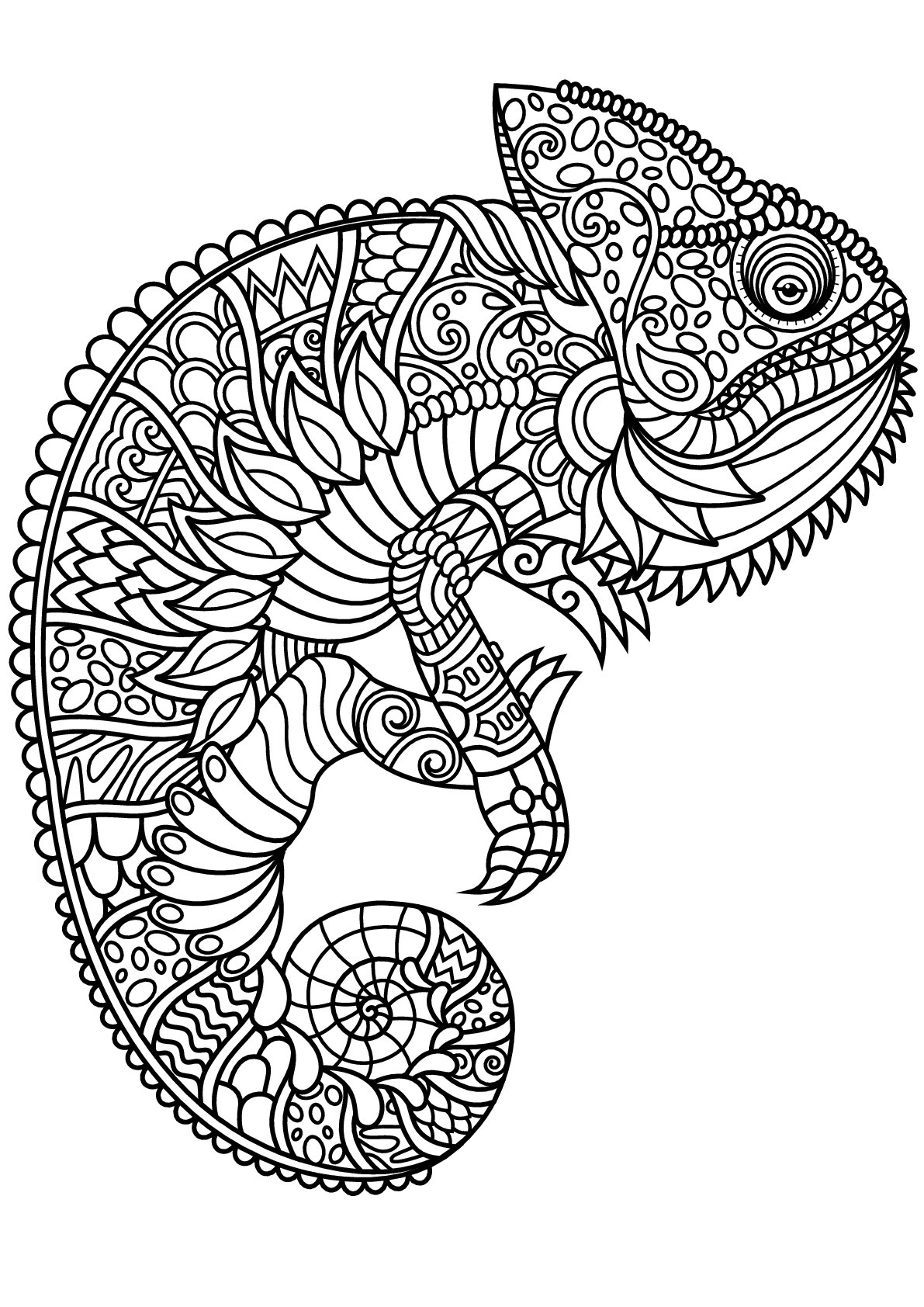Free Book Chameleon Chameleons Lizards Adult Coloring Pages