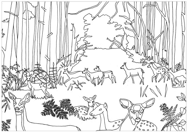 forest coloring page # 2