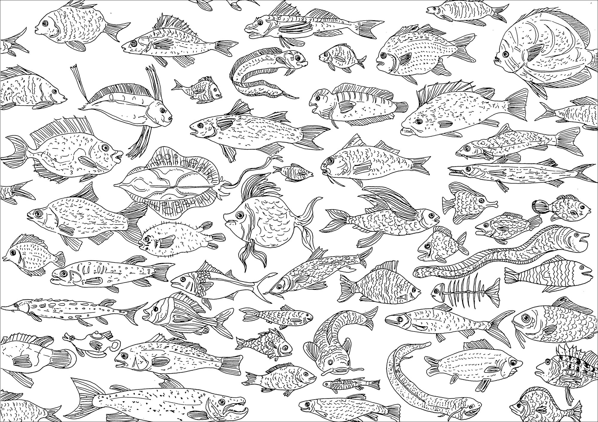 Numerous Fishes