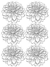 Six dahlia flower - Flowers Adult Coloring Pages