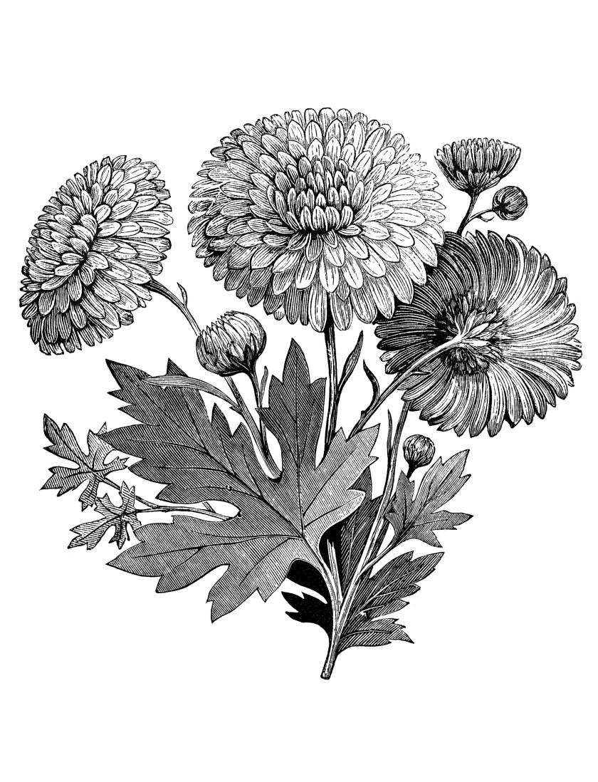 vintage flower garden clip art black and white  flowers