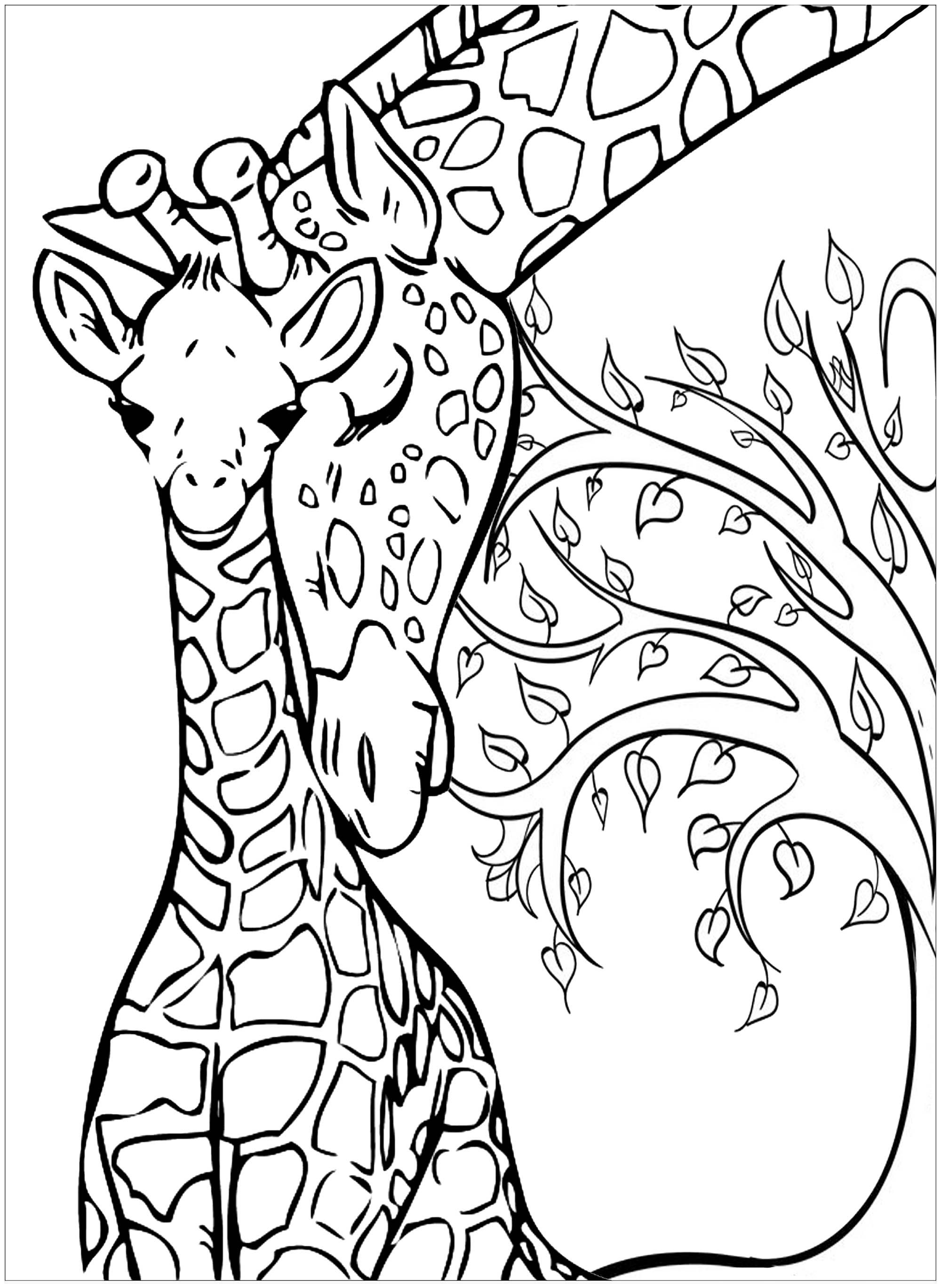 Baby Giraffe And His Mother Giraffes Adult Coloring Pages