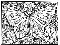 Big butterfly - Butterflies & insects Adult Coloring Pages