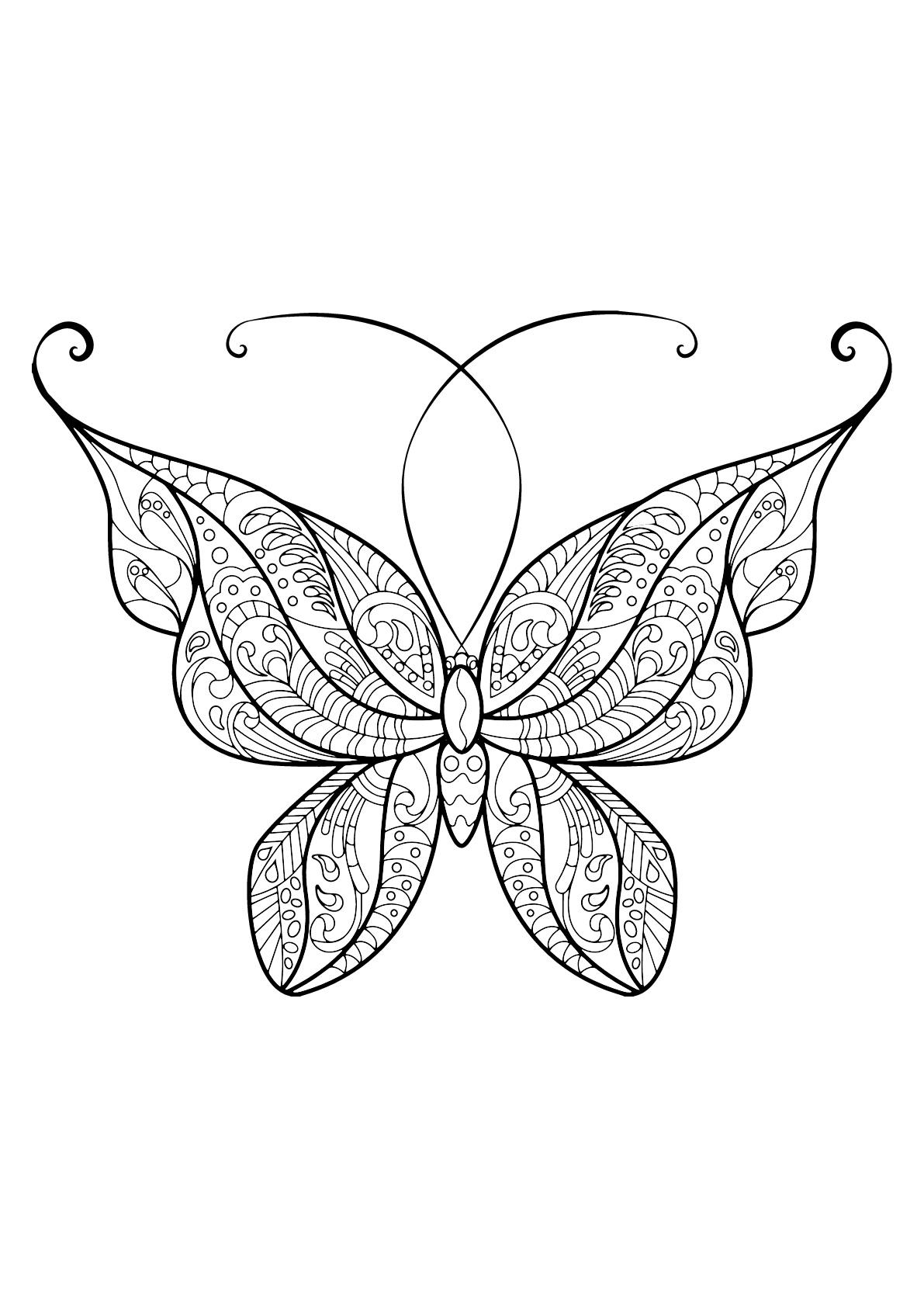Butterfly Beautiful Patterns 14