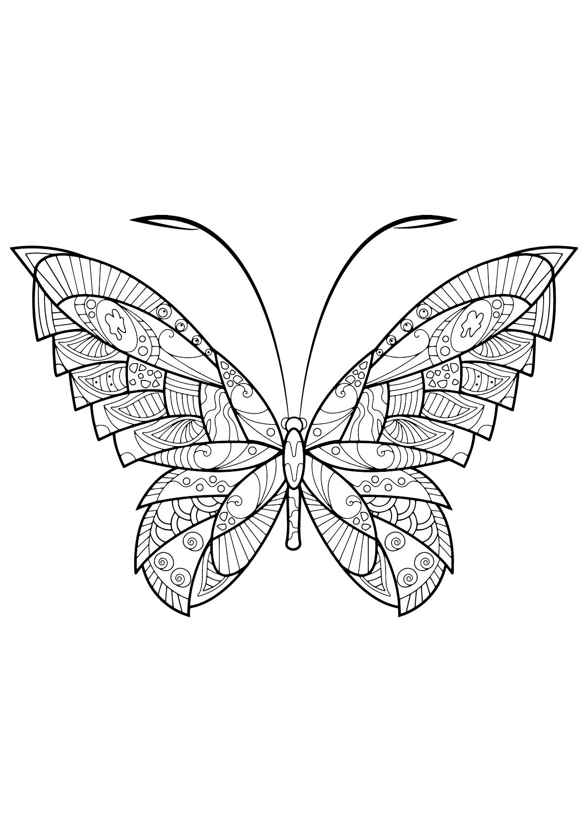 Butterfly Beautiful Patterns 17