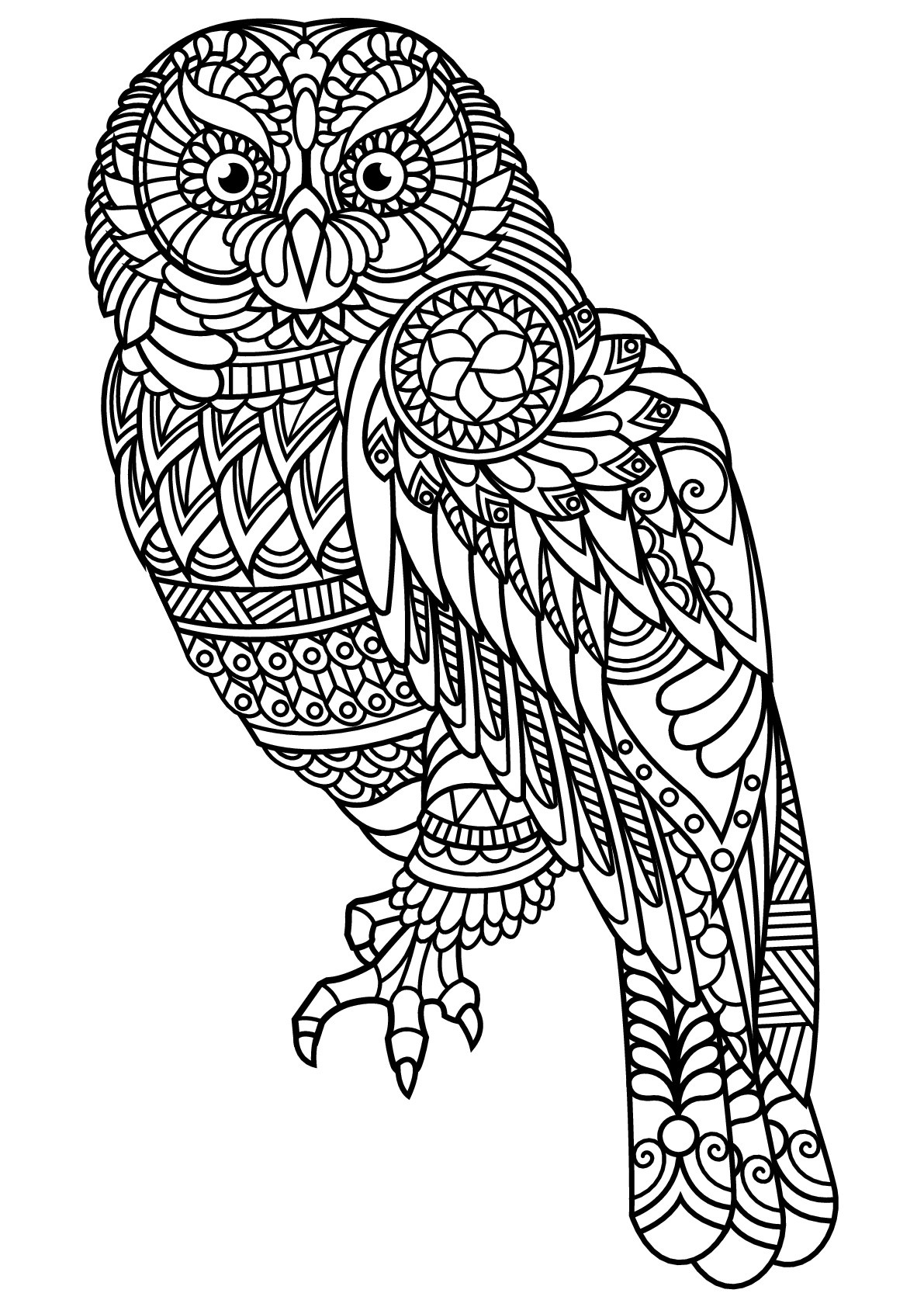 Free Book Owl Owls Adult Coloring Pages