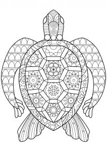 coloring pages turtle # 10