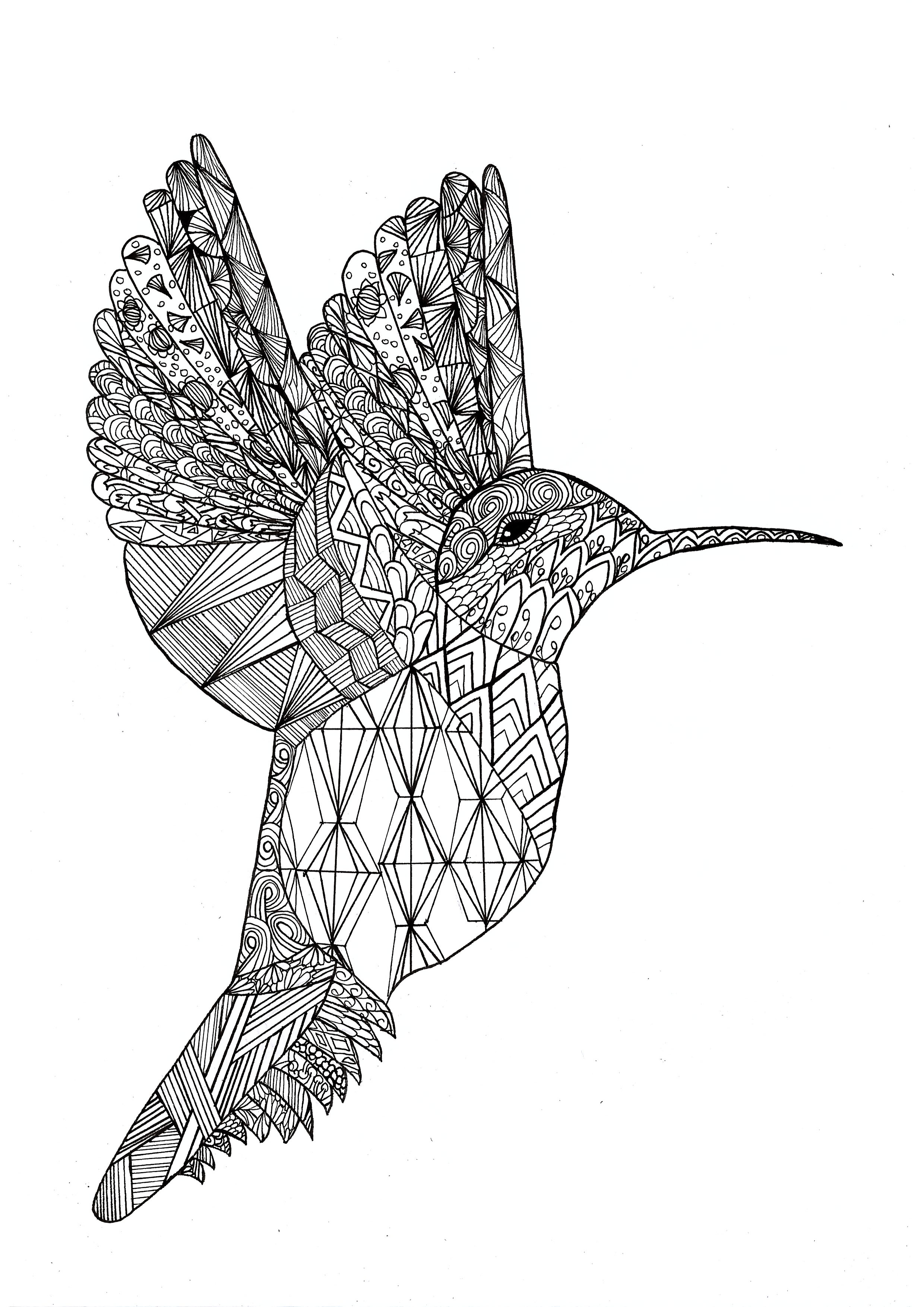 Colibri Par Chloe Zentangle Coloring Pages For Adults Justcolor