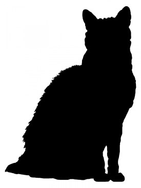 black-cat-1446066082Ecd