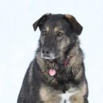 The Homestead dog ~ Stella