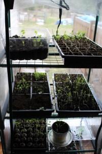 Starting seeds - get a head start on your garden